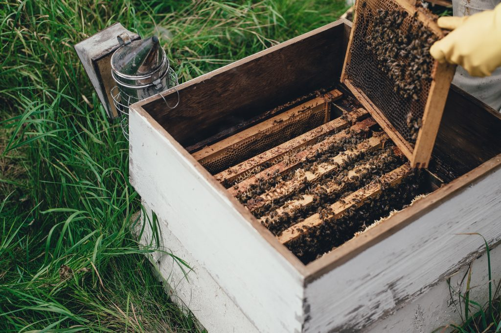The Importance of MGO in Honey