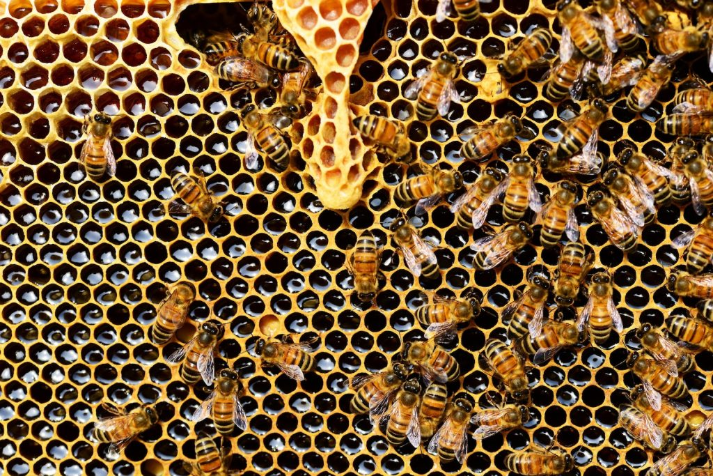 How to select the best manuka honey