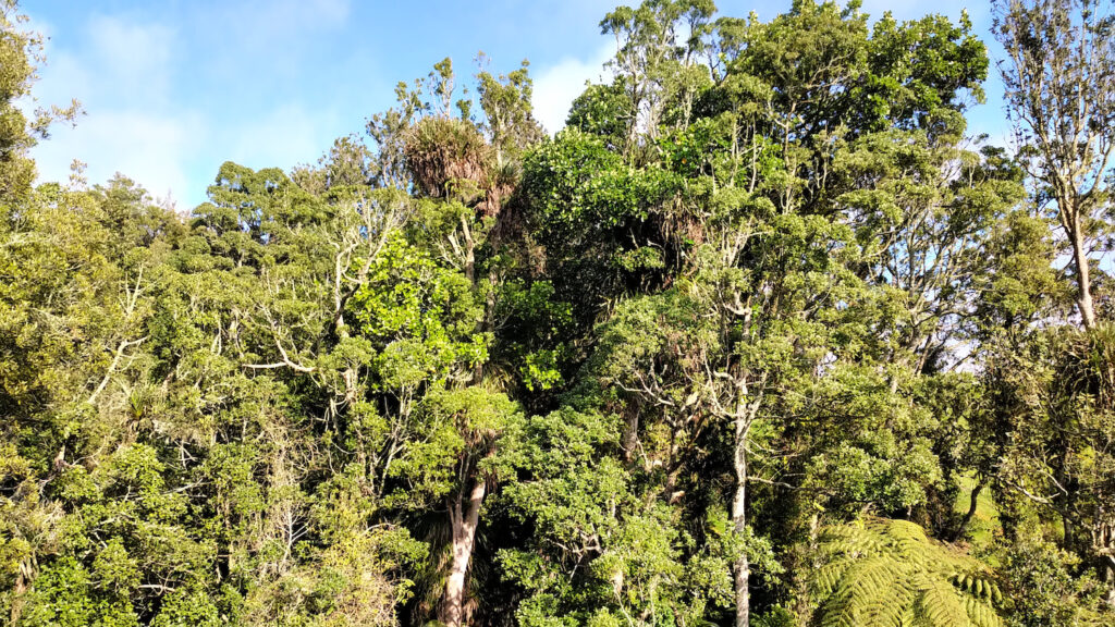 New Zealand Forest Restoration Project